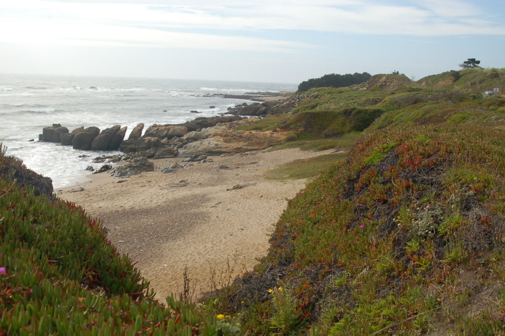 Website1-Pebble-Beach